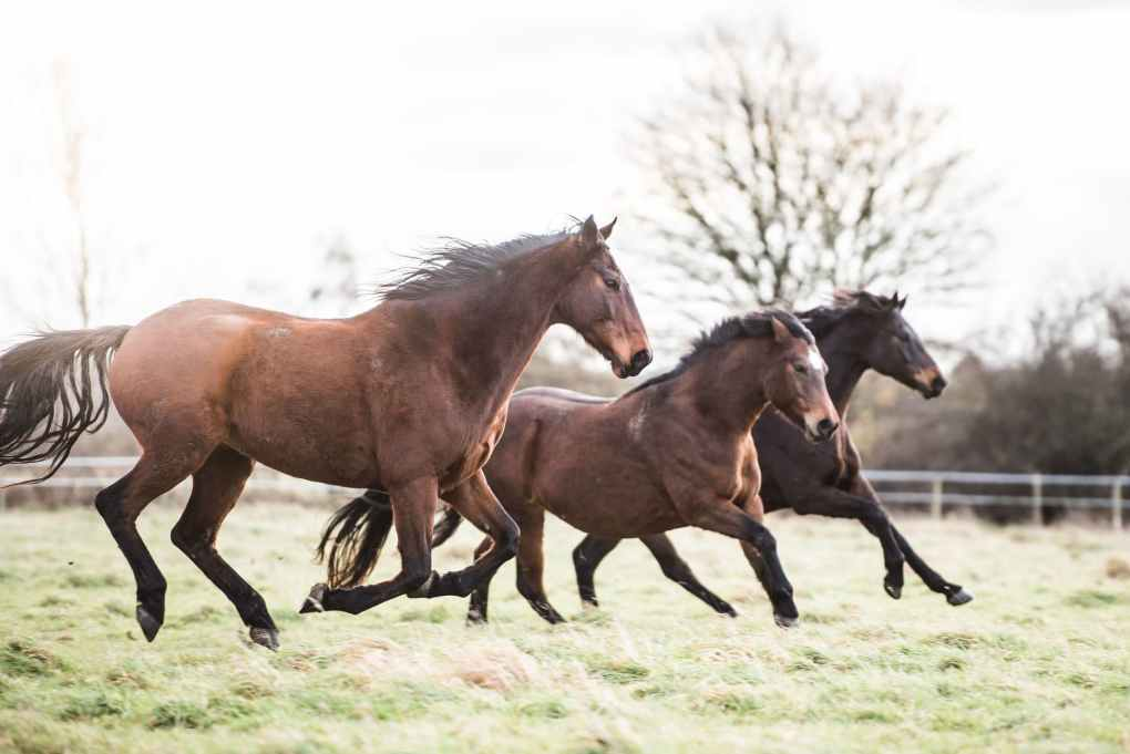 Dealing with arthritis in horses