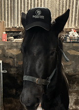 equine winter tips