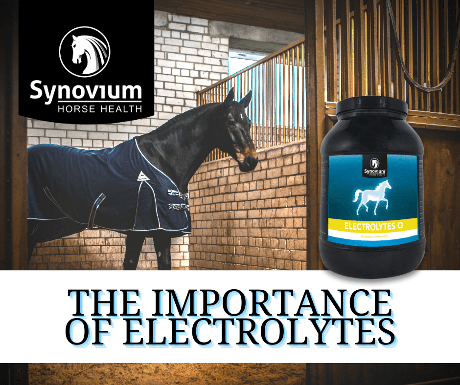 The importance of electrolytes for horses