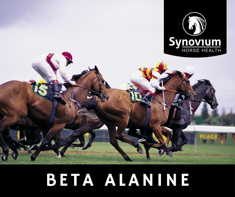 Beta alanine for horses muscle acidification