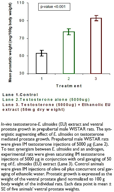 In vivo anabolism between testosterone and Eucommia ulmoide