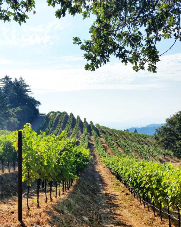Cain Vineyards – Exploring Napa's Complex Geology with Chris Howell