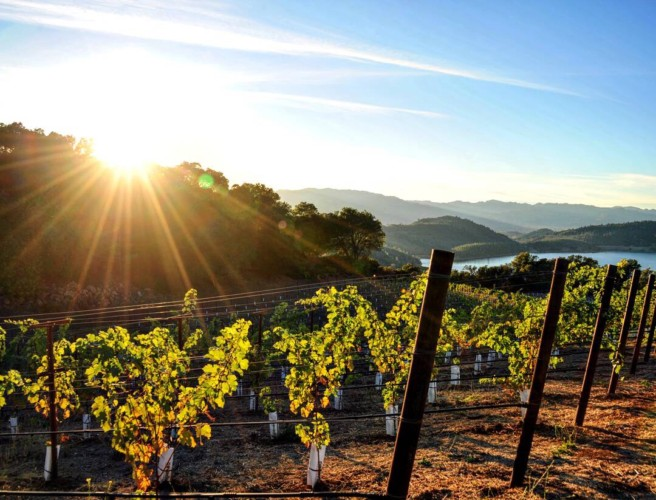 7 Reasons Napa Valley Is So Unique