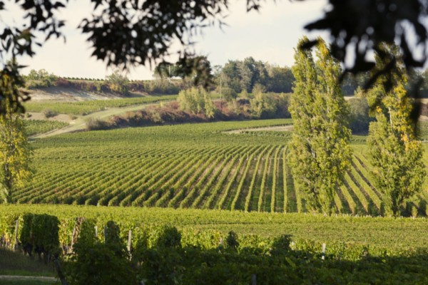 5 Reasons You Should Be Drinking Côtes de Bordeaux Wines