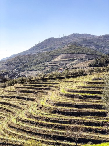 Douro Valley White Wines