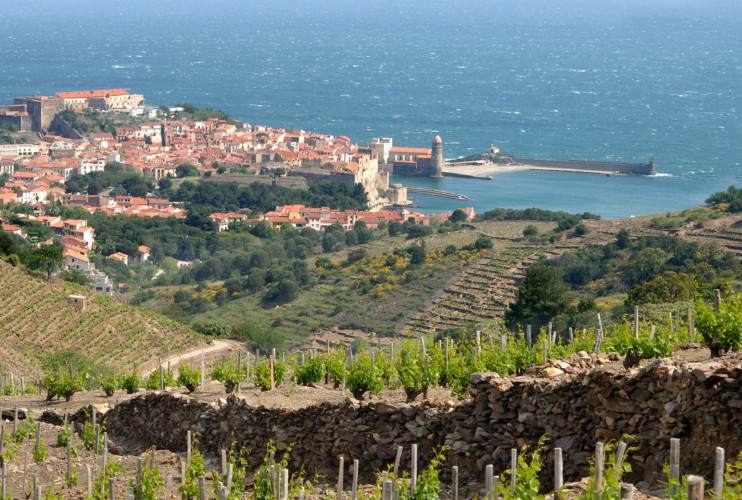 Snooth Roussillon