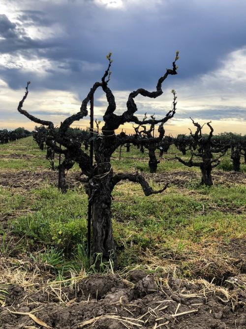 Lodi Wines