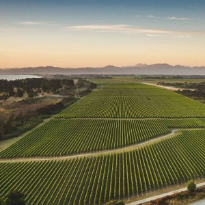 Wither Hills Wines