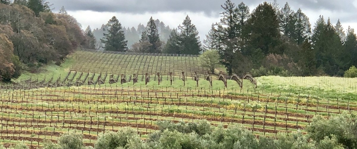 Conversations With Winemaker Charlie Smith – Smith-Madrone Wines