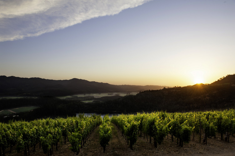 Viader Winery