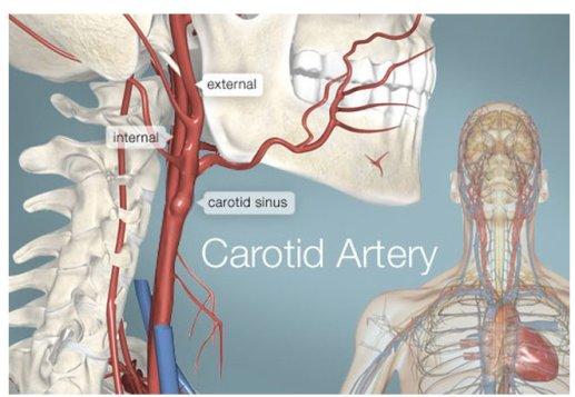 anatomical-neck-jpg