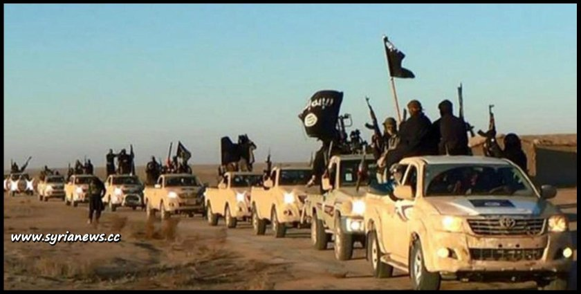image-ISIS parade with their Toyota pick ups across the Syrian Iraqi deserts