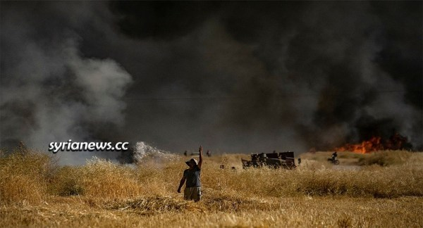 USA and Turkey and their terrorists burning Syria wheat fields