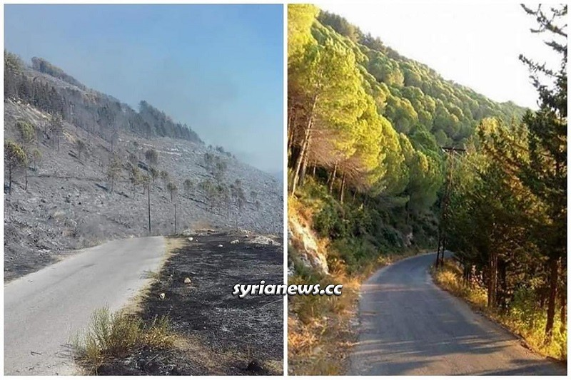Heartbreaking image of before and after the fire in Syrian coastal forests