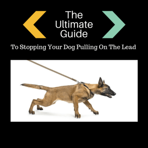 Dog pulling? Learn how to stop your dog pulling