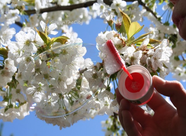 cerisier dans bulle sysyinthecity