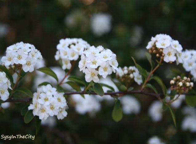 fleur sysyinthecity