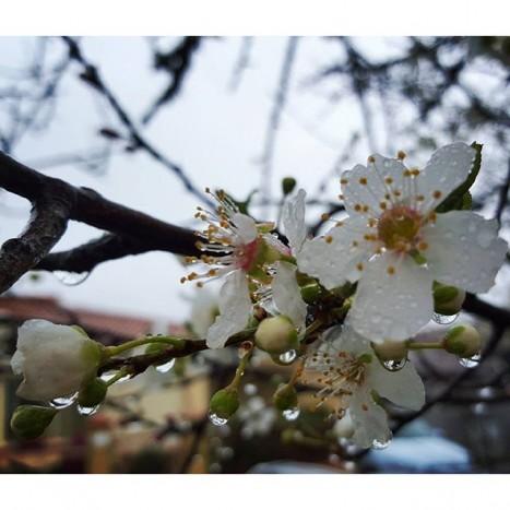 fleurs pluie