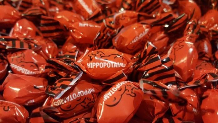 hippopotamus (8)