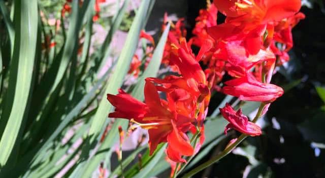Növények a meséből, a gyógyításból, a kertből