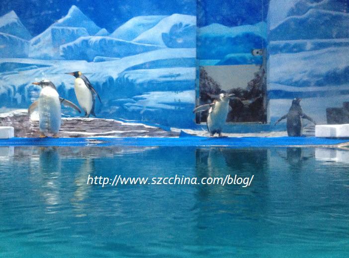 shenzhen ocean world penguin