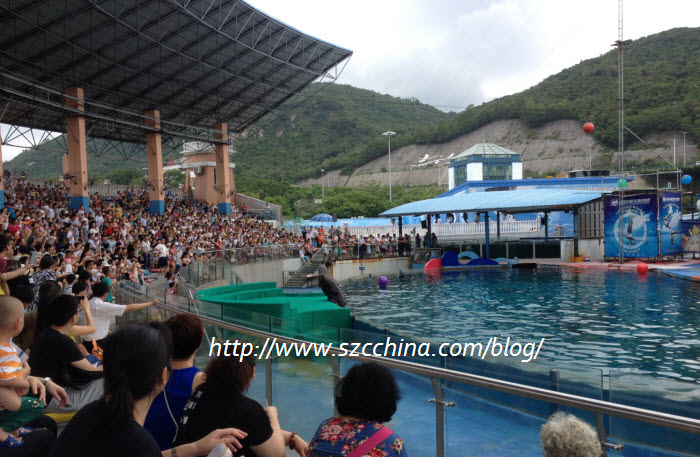 shenzhen ocean world performance