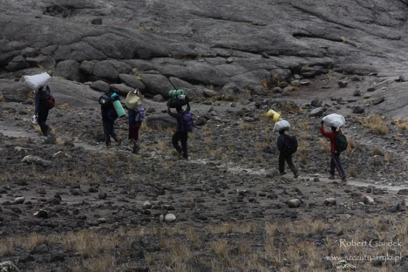 Koszt wejścia na Kilimandżaro - tragarze w drodze na Kilimandżaro