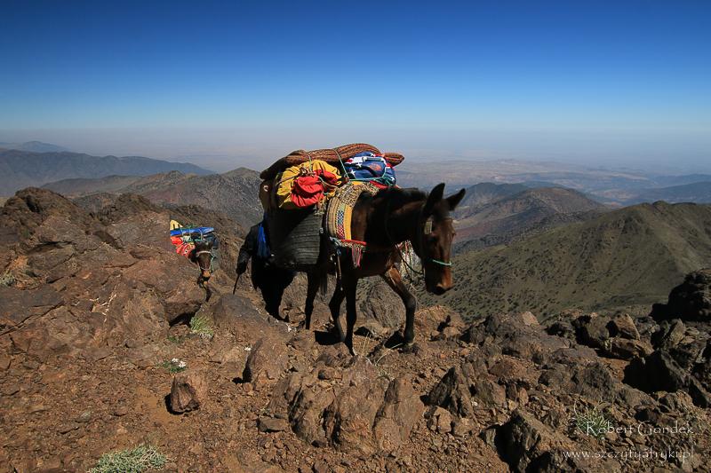 Koszt trekkingu na Jebel Toubkal - muł w górach Atlas