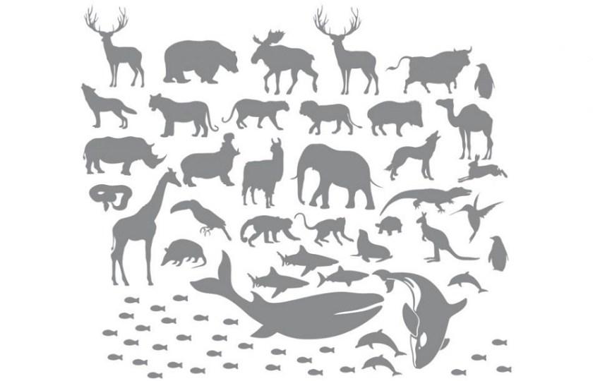 Zwierzęta - naklejki na ścianę