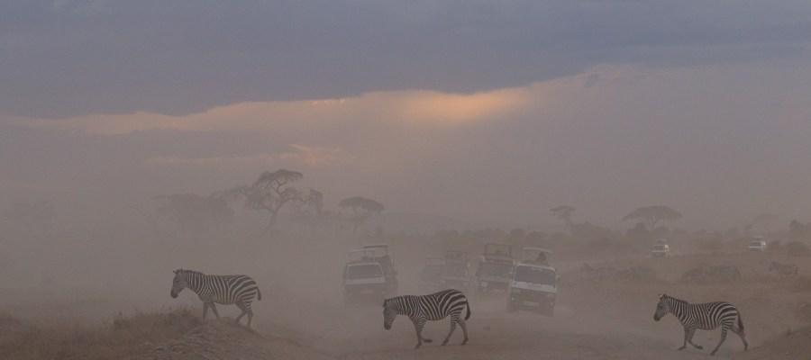 Pył, kurz i zebry w Parku Narodowym Amboseli w Kenii