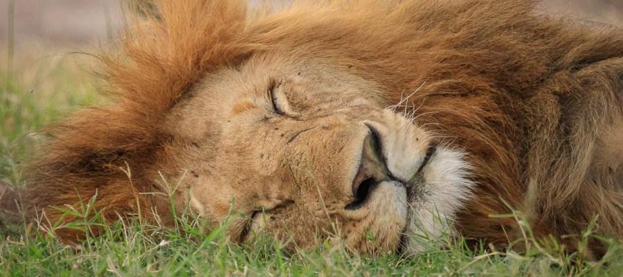 Ile kosztuje safari w Kenii