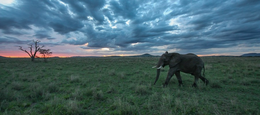 Safari w Tanzanii - Serengeti National Park