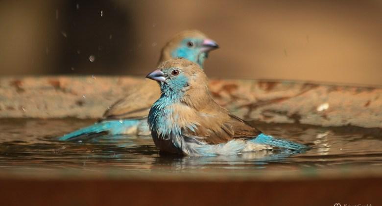 Fotografowanie ptaków nad jeziorem Malawi