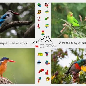 Zdjęcia afrykańskich ptaków