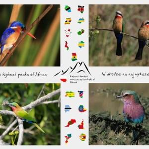 Zdjęcia kolorowych ptaków z Afryki