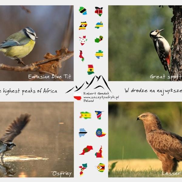 Zdjęcia polskich ptaków