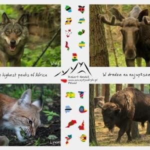 Zdjęcia zwierząt z Polski