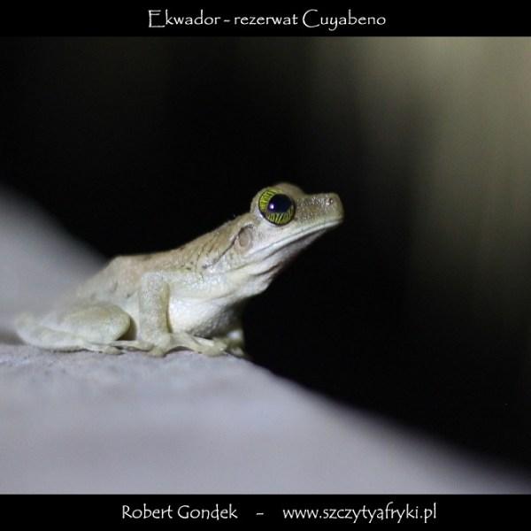 Zdjęcie z rezerwatu Cuyabeno w Ekwadorze