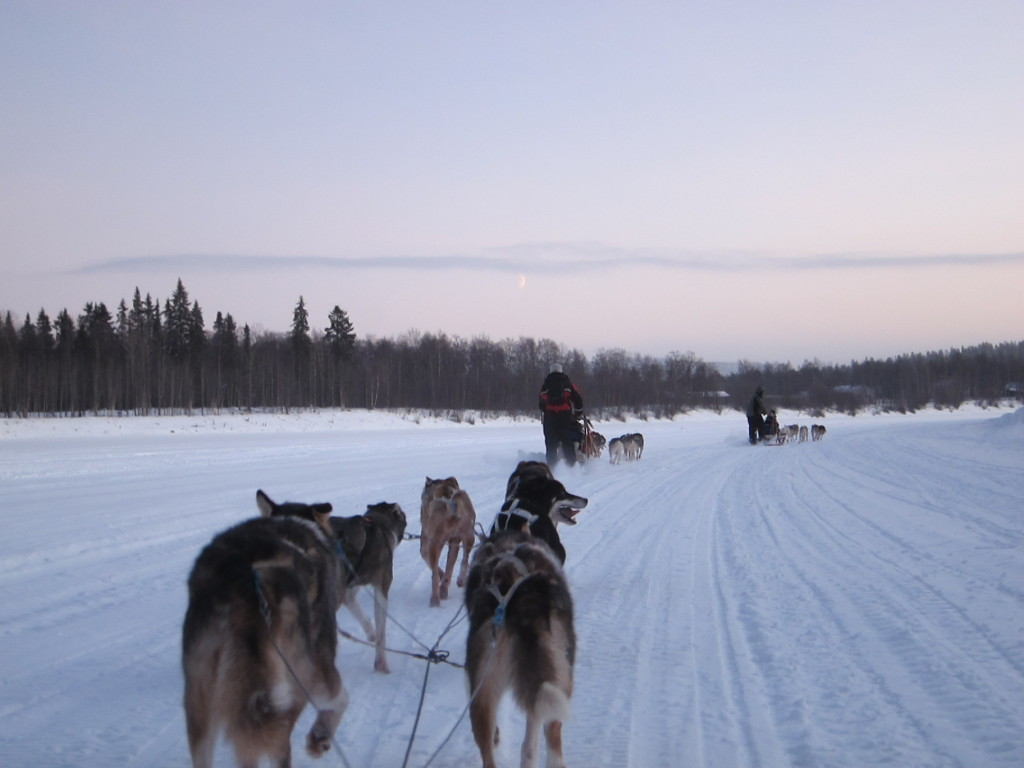 Husky ride in Finland