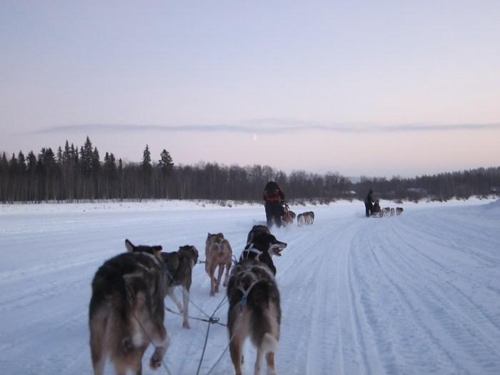Husky ride in Finland