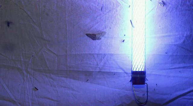 T5 Grow Light Bulbs