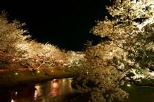 玉造桜夜景
