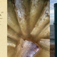 Rezept der Woche: Felchen-Escabeche