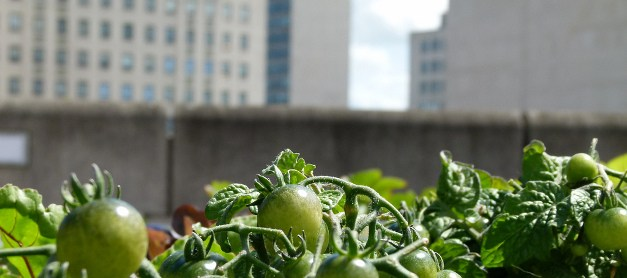 Nichts geht über echte Berliner San-Marzano-Tomaten