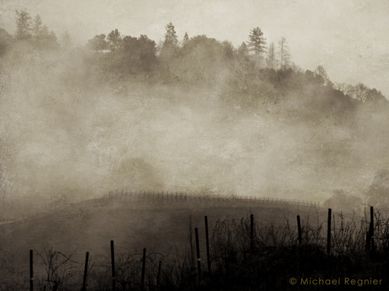 Vineyard shrouded in fog.  ©michael regnier 2007
