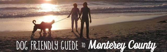 Dog Friendly Guide to Monterey County