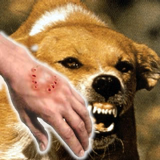 Image result for rabies