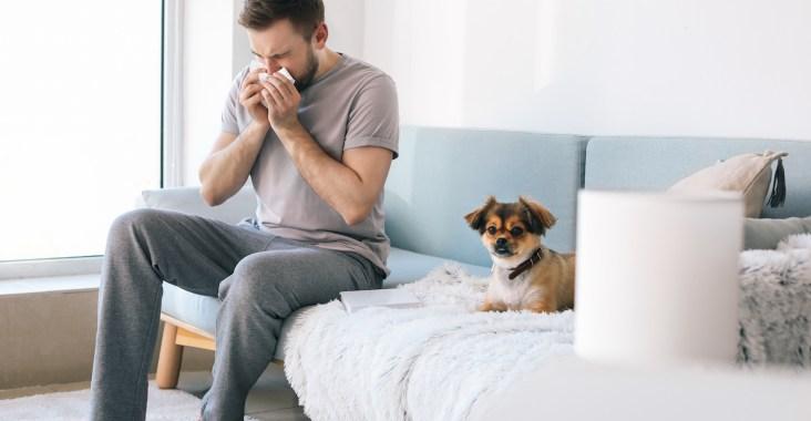 allergie aux chiens