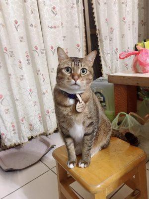 寵物溝通推薦、寵物溝通師、李朋娟
