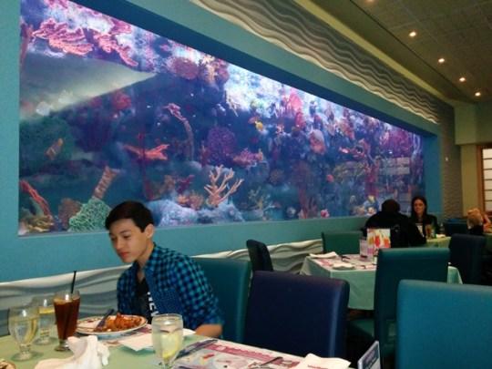 mandarin aquarium